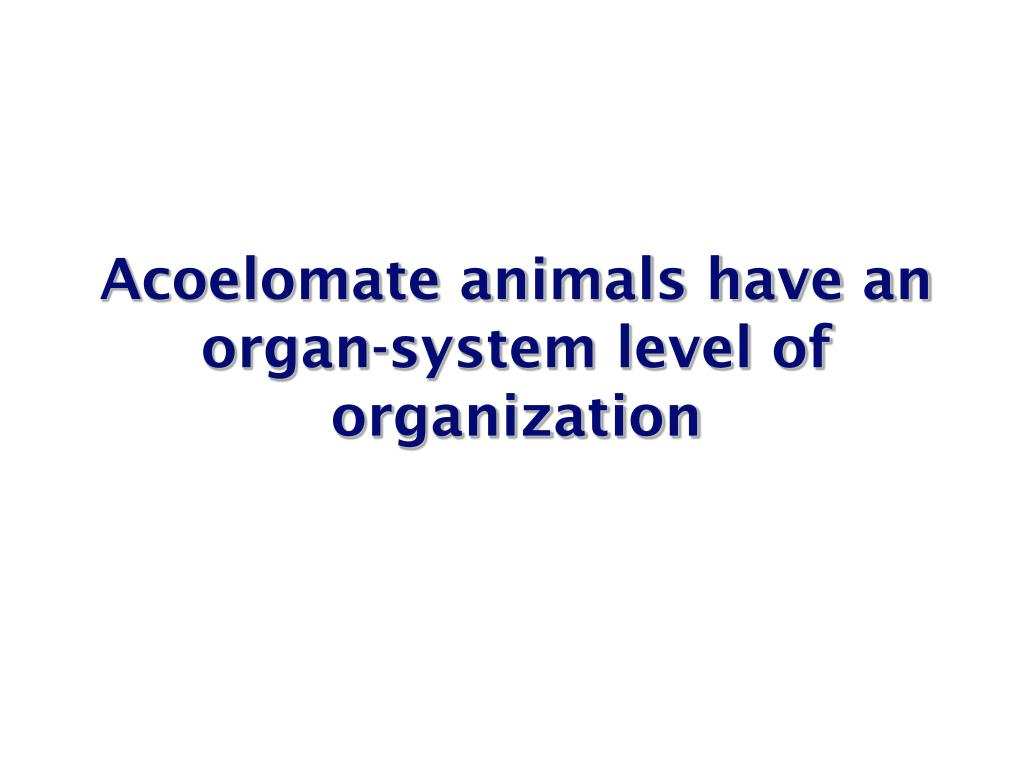 Acoelomate animals have an organ-system level of organization
