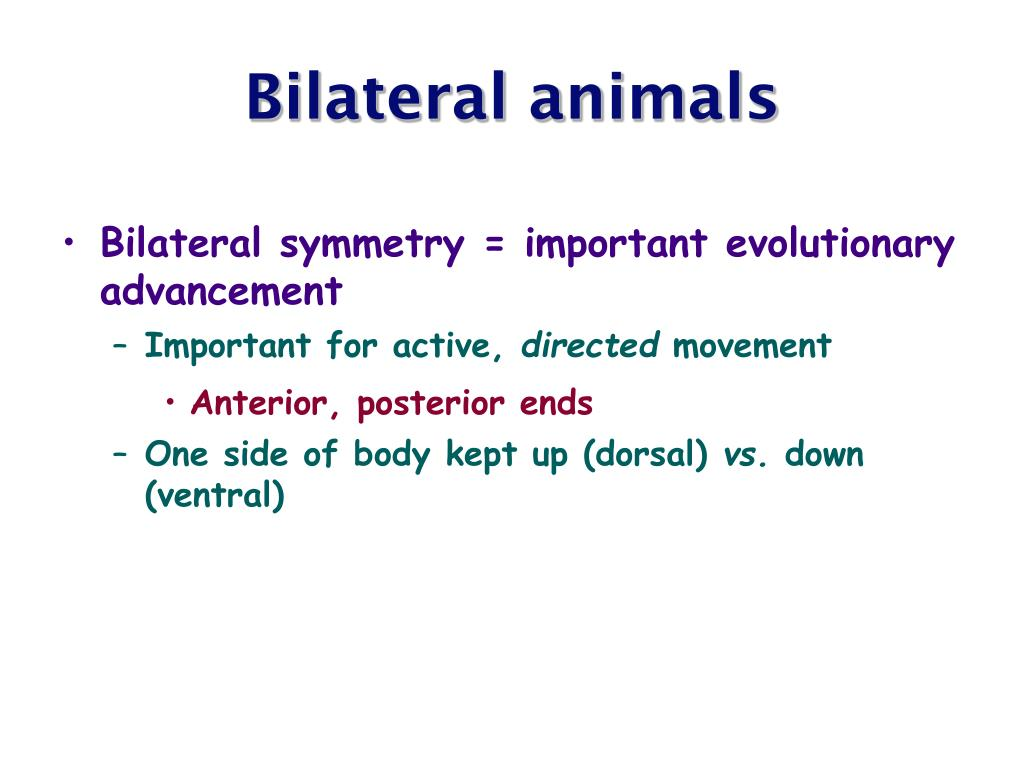 Bilateral animals