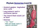phylum nemertea cont d47