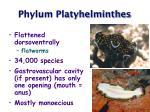 phylum platyhelminthes18