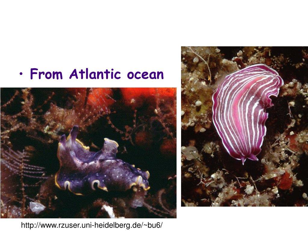 From Atlantic ocean