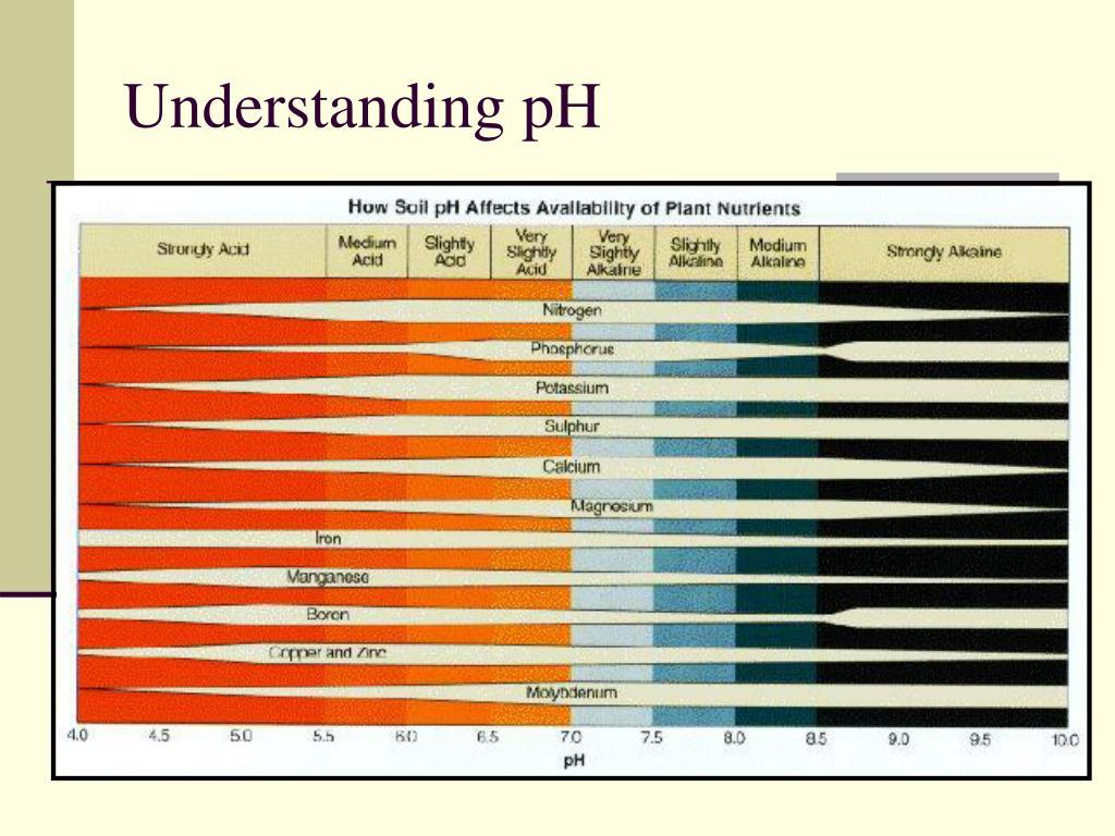 Understanding pH