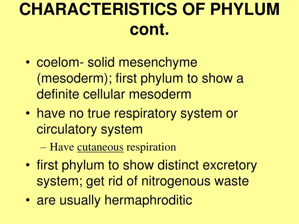CHARACTERISTICS OF PHYLUM