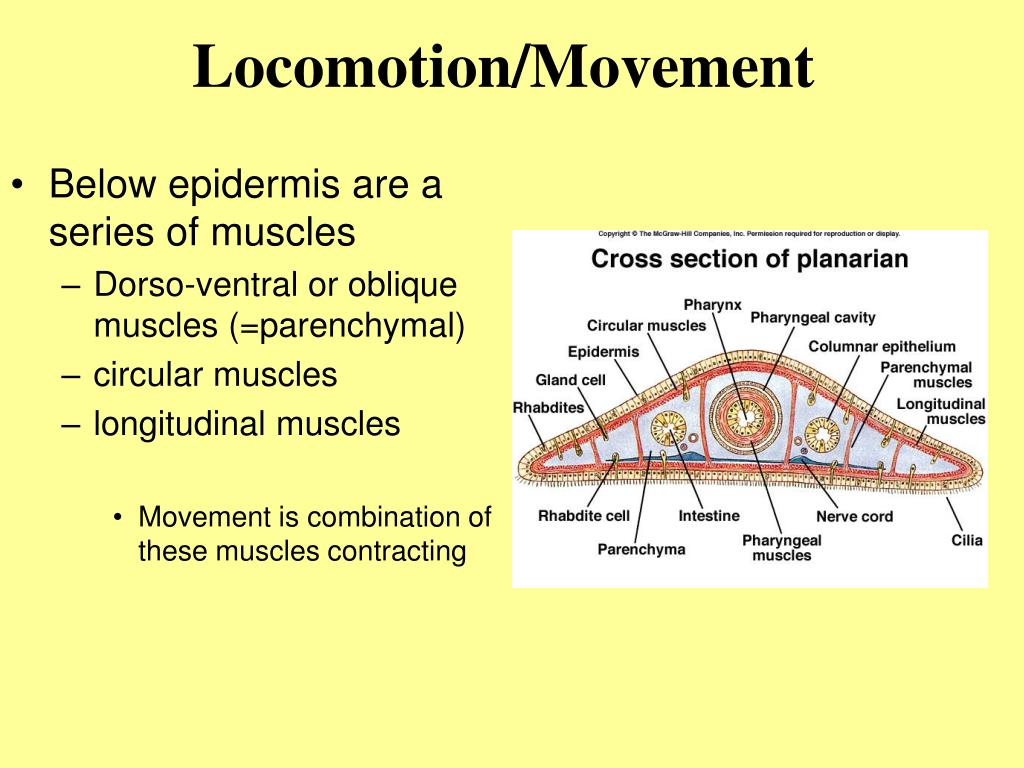 Locomotion/Movement