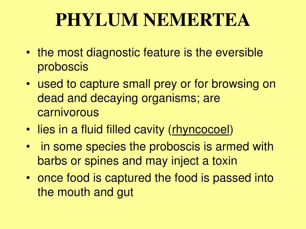 PHYLUM NEMERTEA