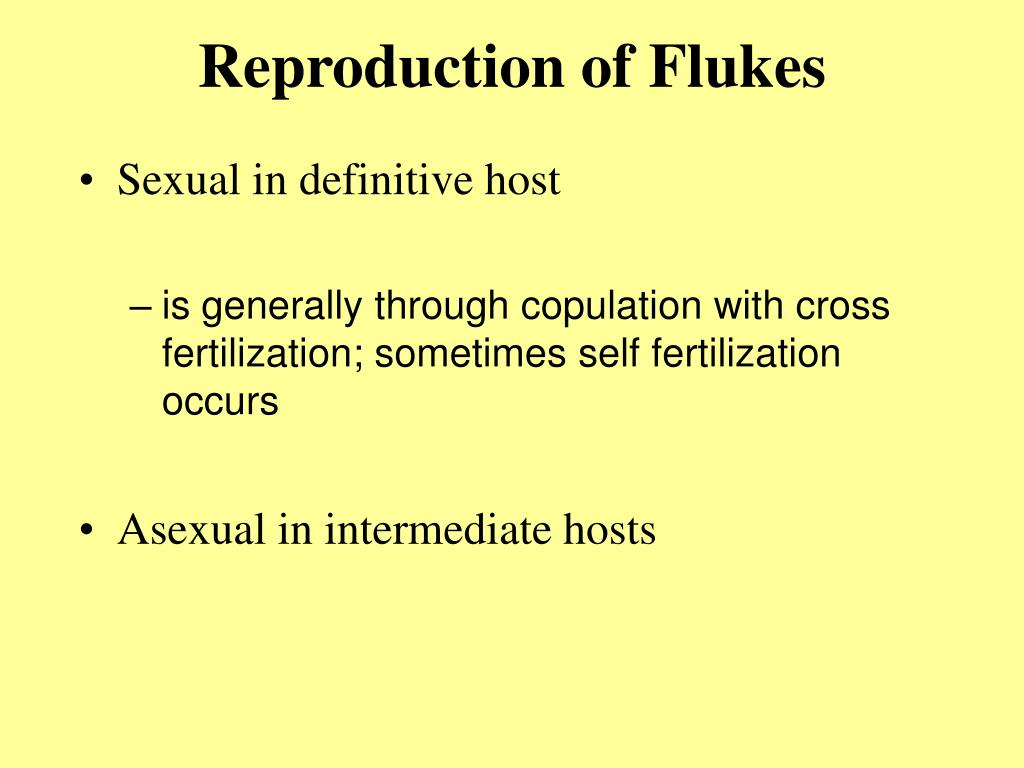 Reproduction of Flukes