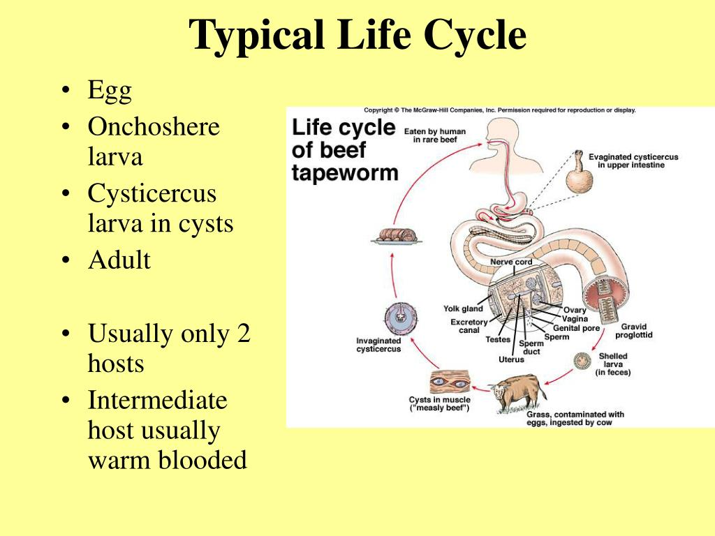 Typical Life Cycle