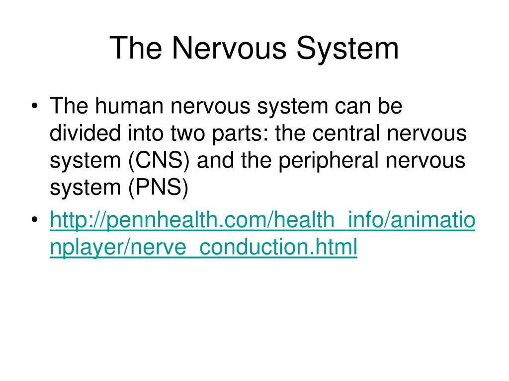 the nervous system ppt Create a highly informative and academic presentation using the anatomy of human nervous system slide design for powerpoint the detailed graphics and usef.