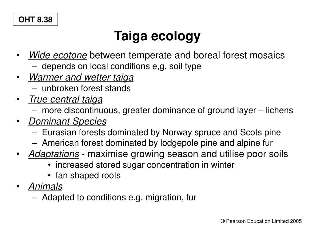 Taiga ecology