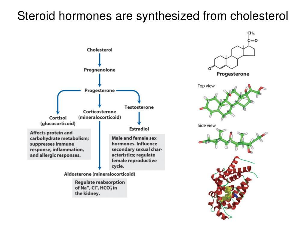 steroid hormone metabolism steimer