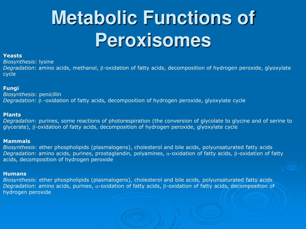 Metabolic Functions of Peroxisomes