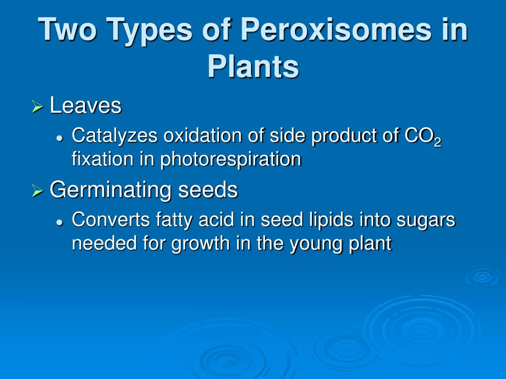 Two Types of Peroxisomes in Plants