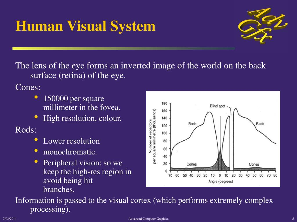 Human Visual System
