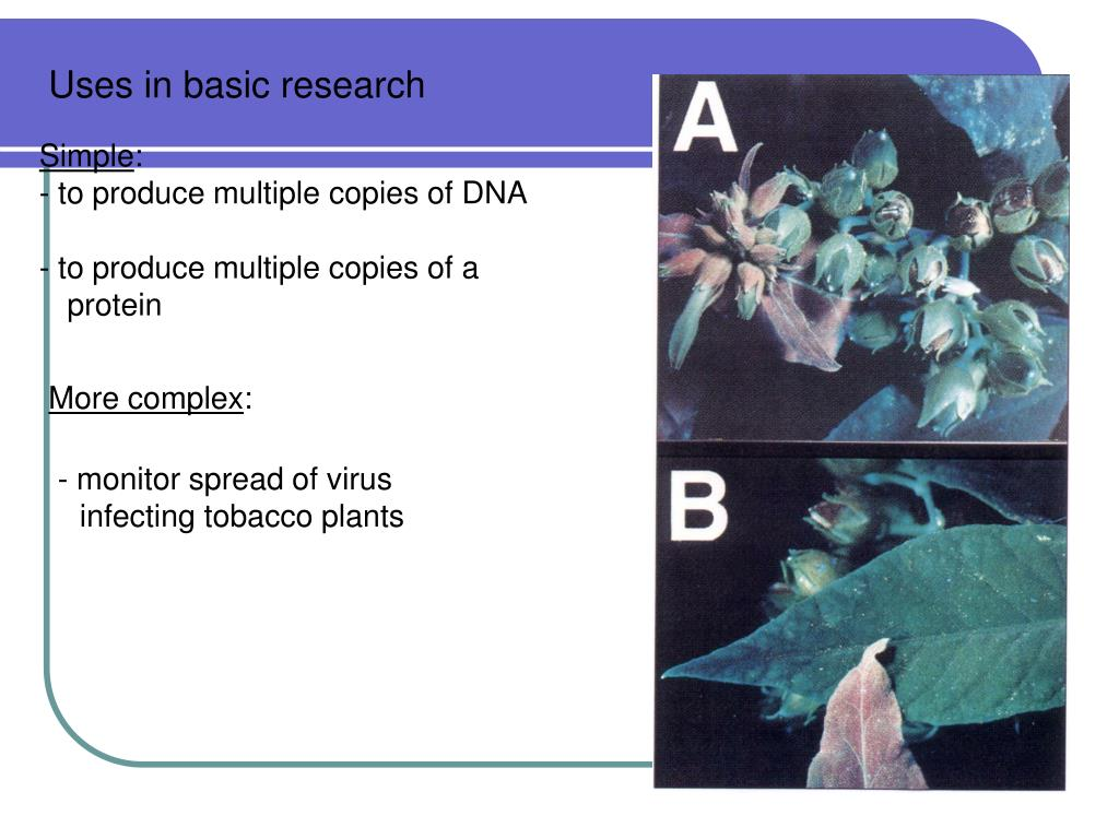 Uses in basic research