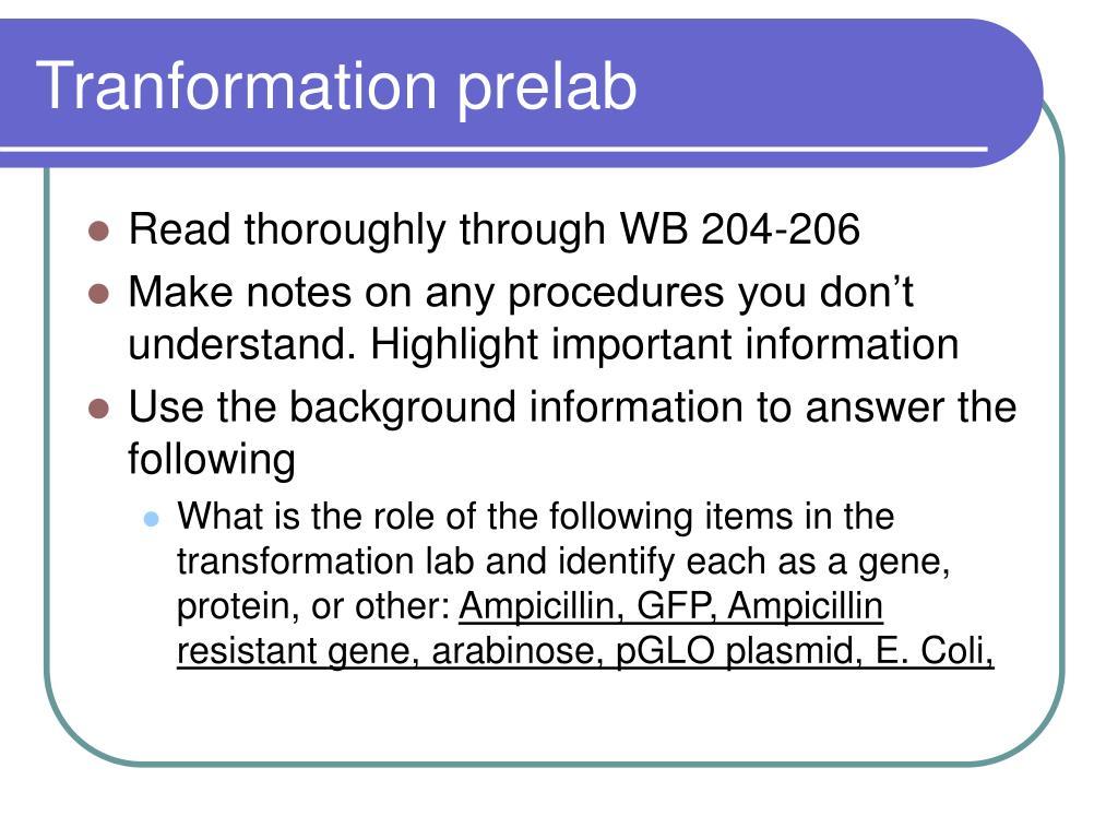 Tranformation prelab