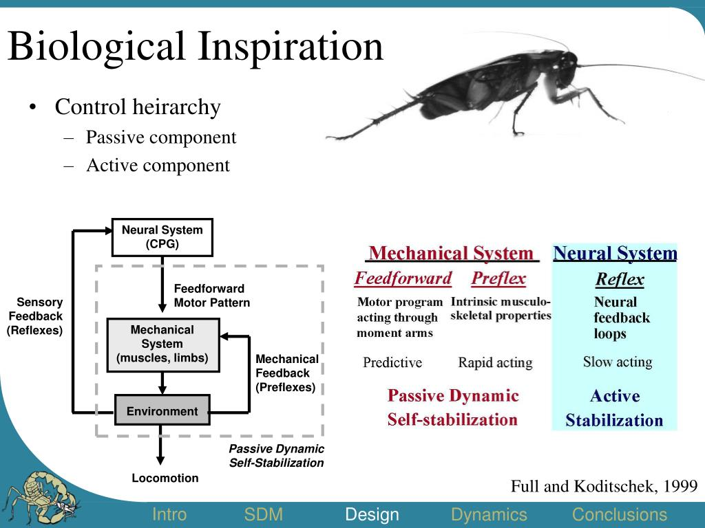 Biological Inspiration