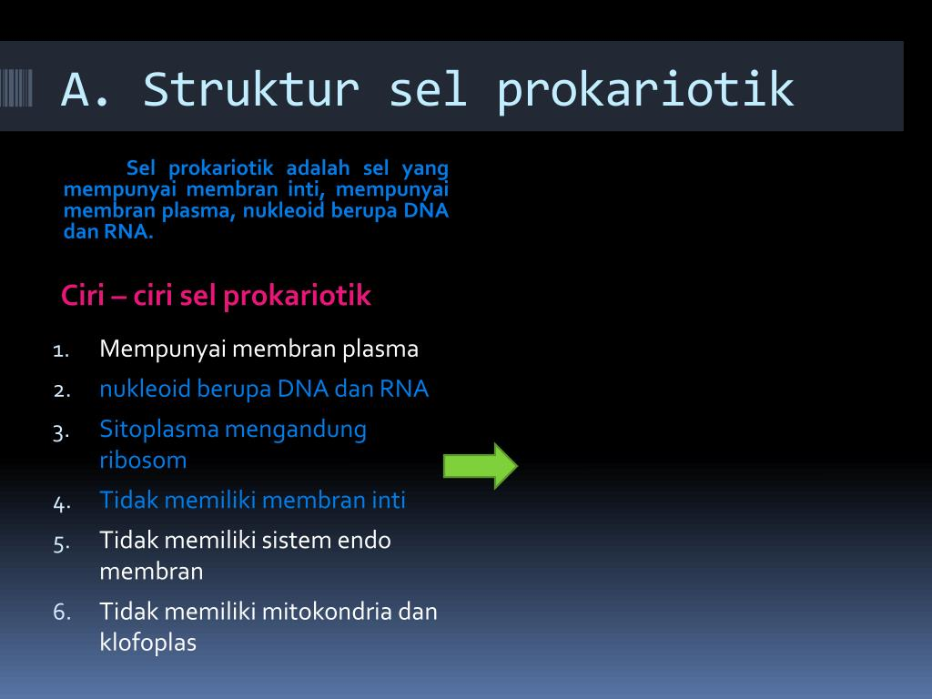 A. Struktur sel prokariotik