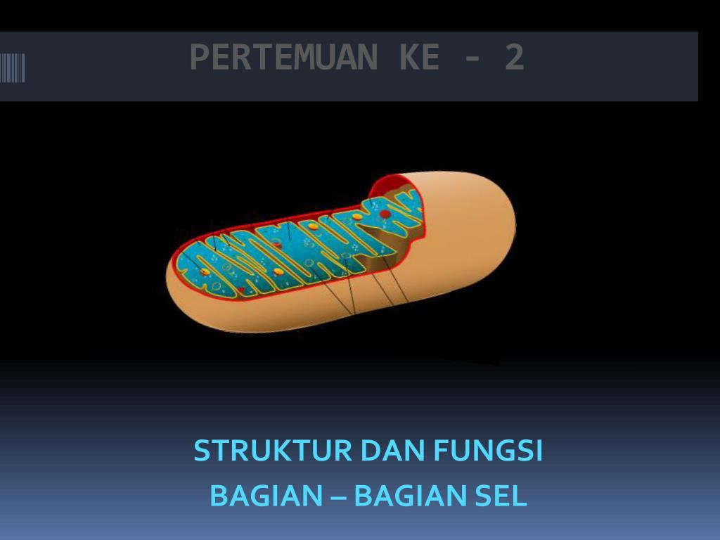 PERTEMUAN KE - 2