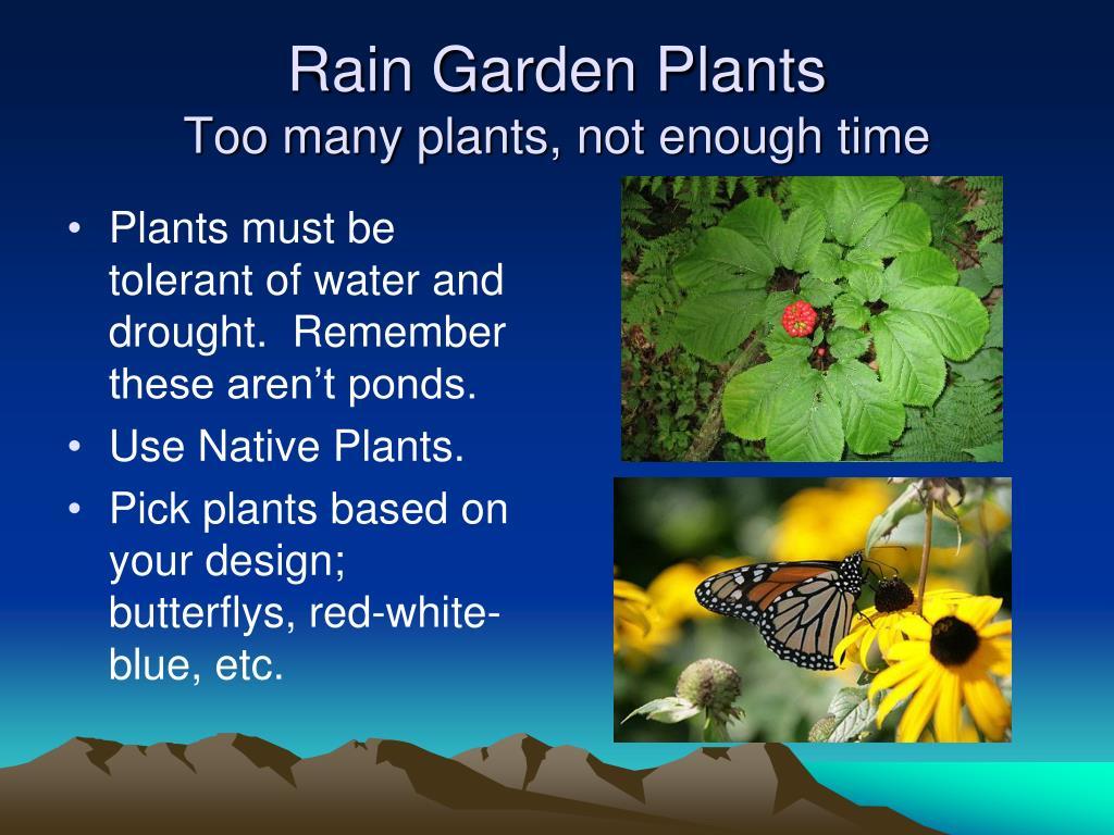 Rain Garden Plants