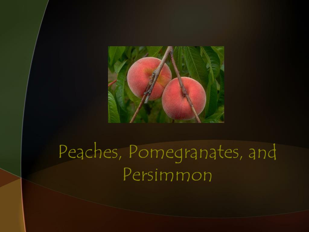 Peaches, Pomegranates, and Persimmon