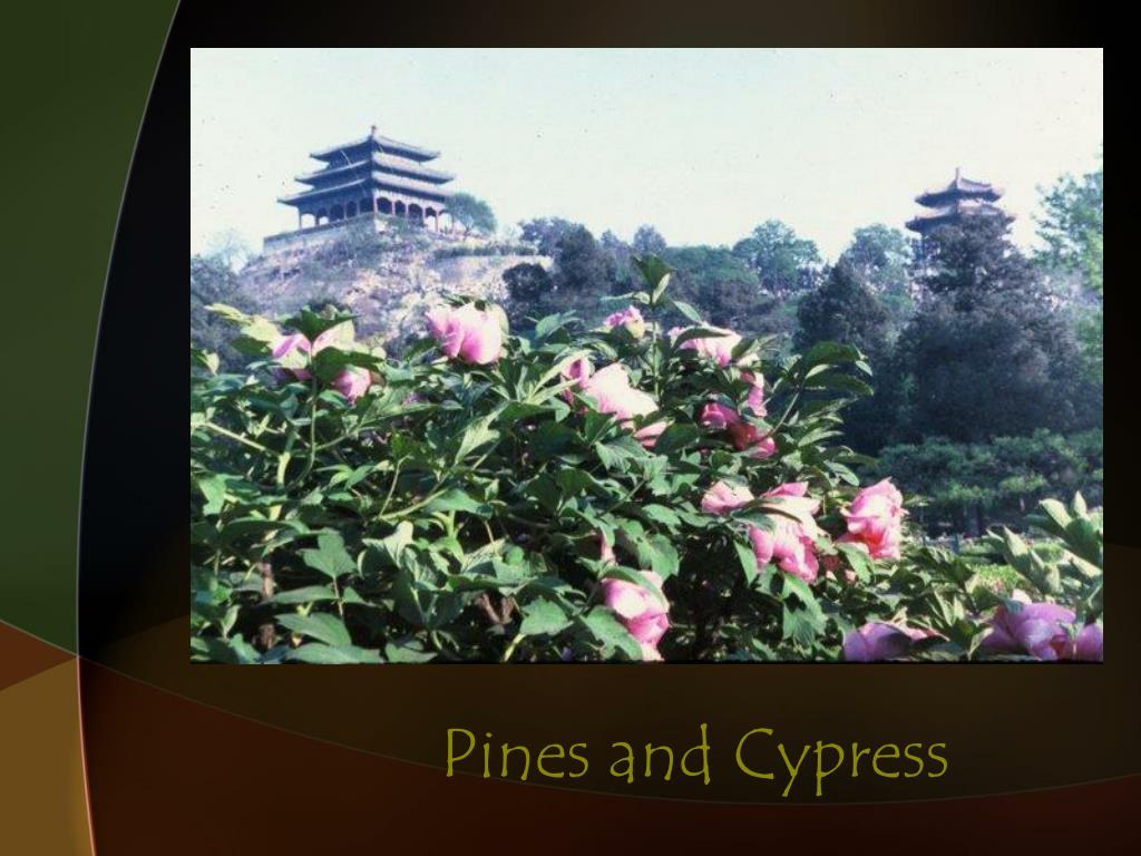 Pines and Cypress