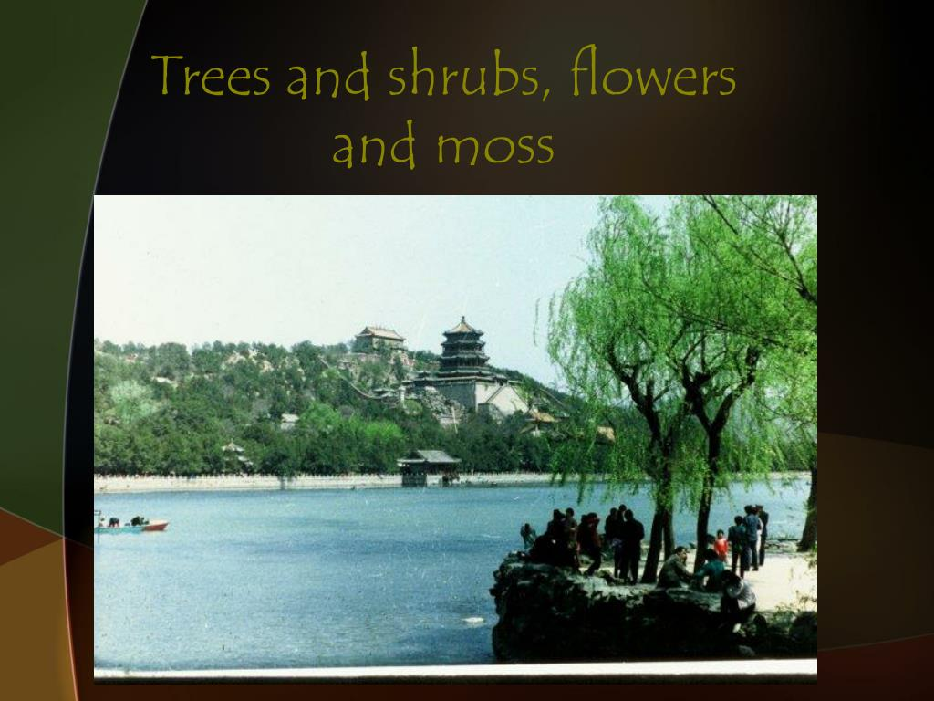 Trees and shrubs, flowers and moss