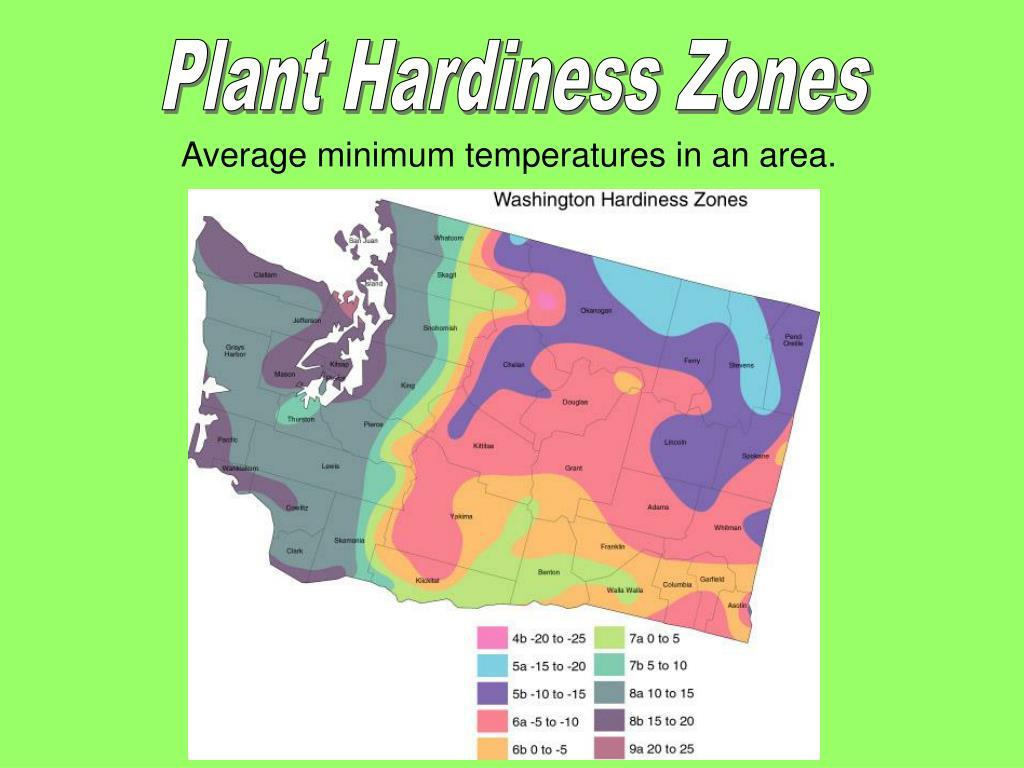 Plant Hardiness Zones