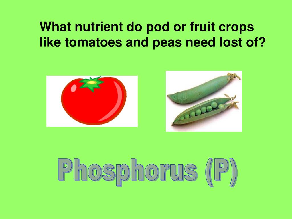 What nutrient do pod or fruit crops like tomatoes and peas need lost of?