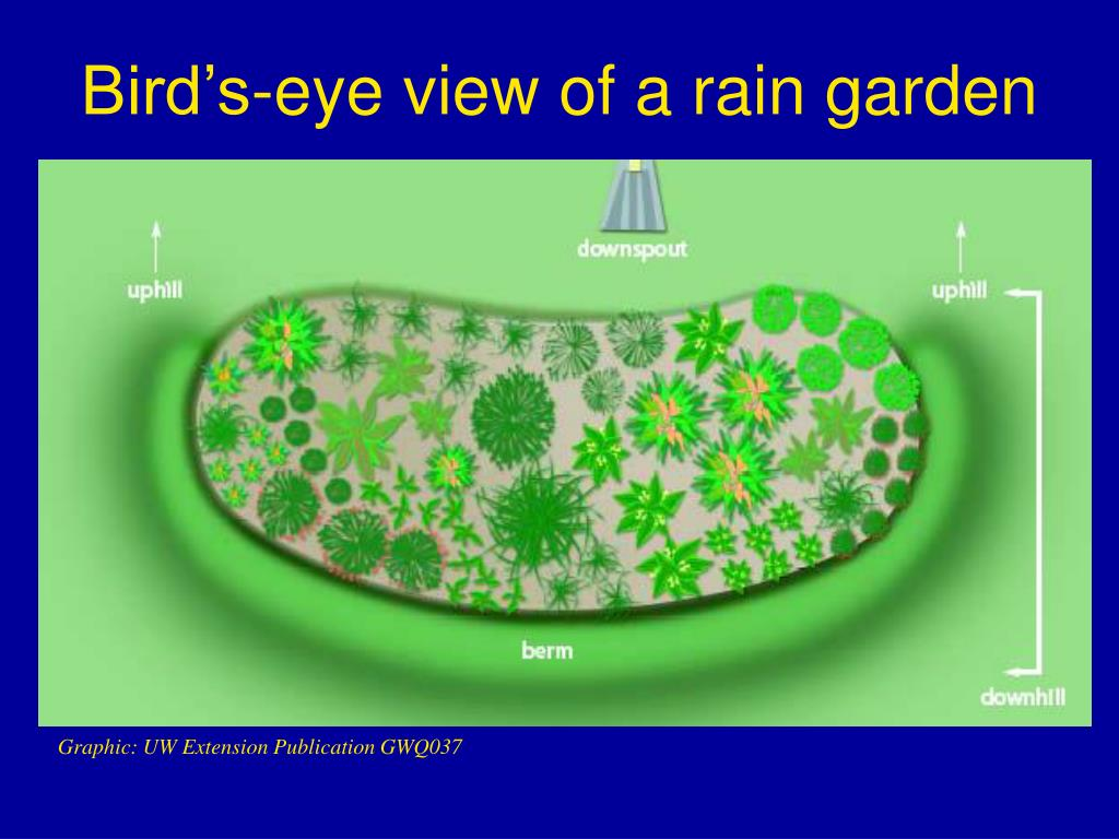 Bird's-eye view of a rain garden
