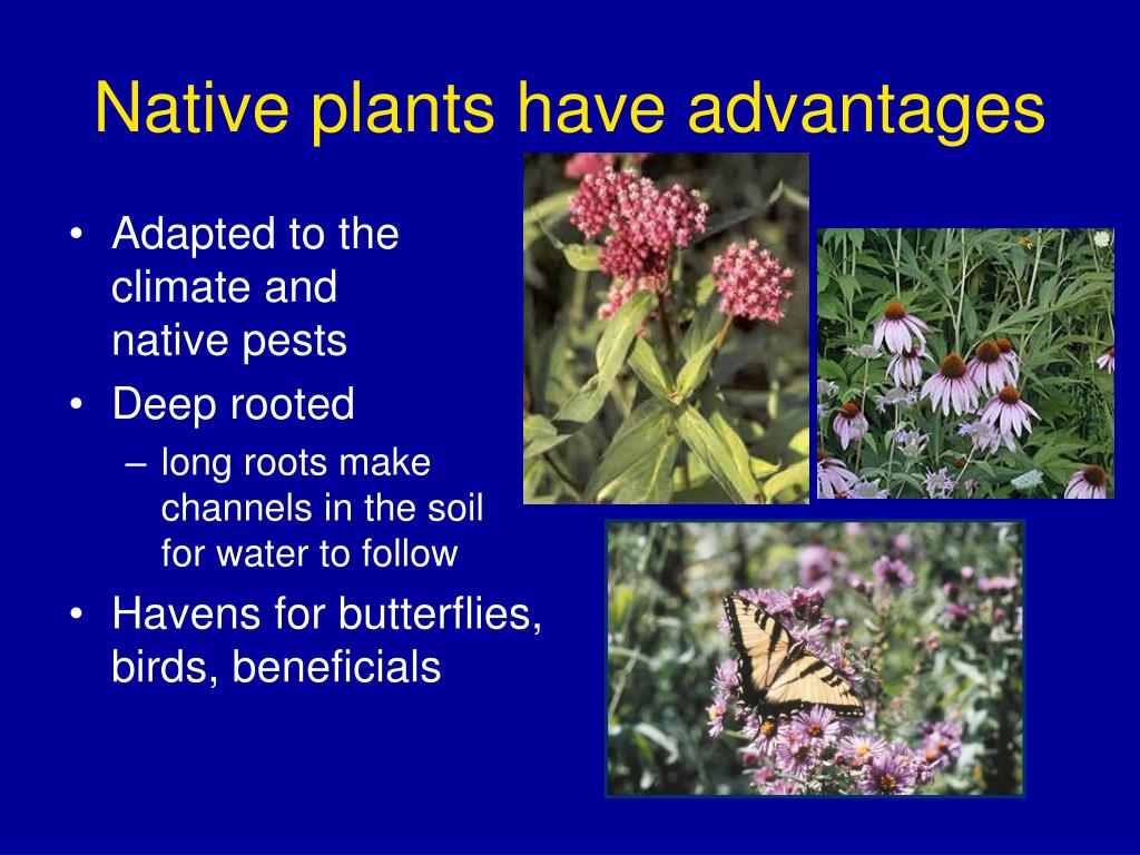 Native plants have advantages