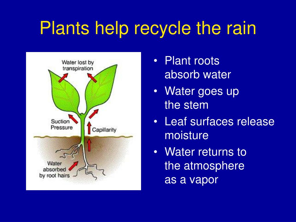 Plants help recycle the rain