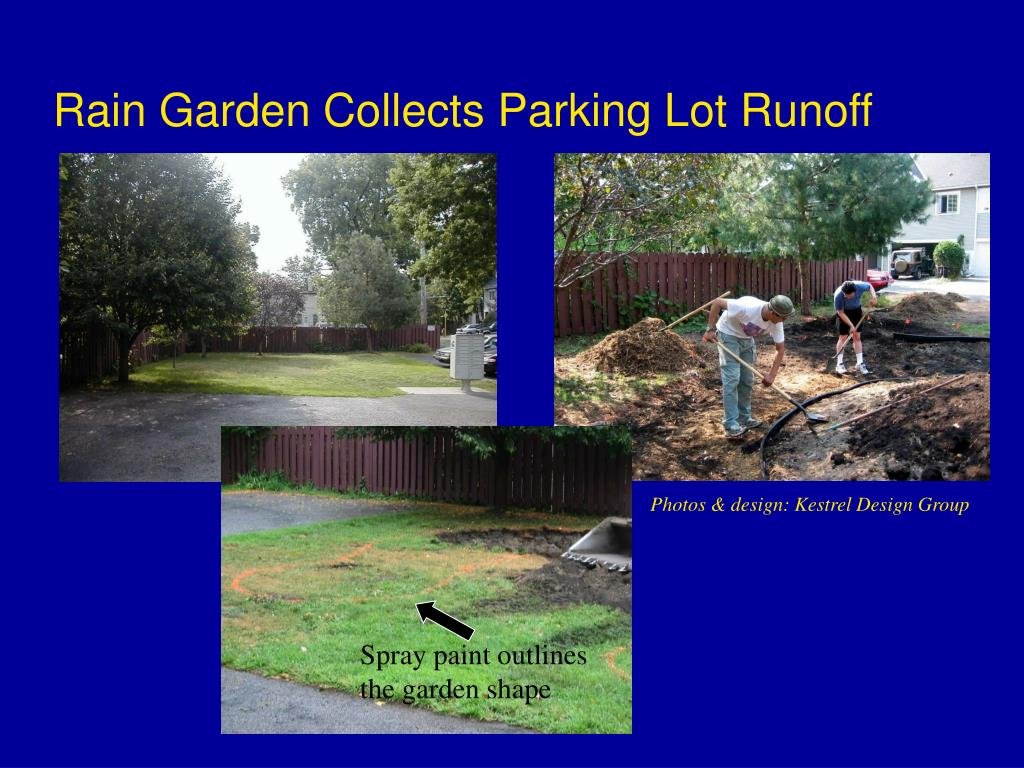 Rain Garden Collects Parking Lot Runoff