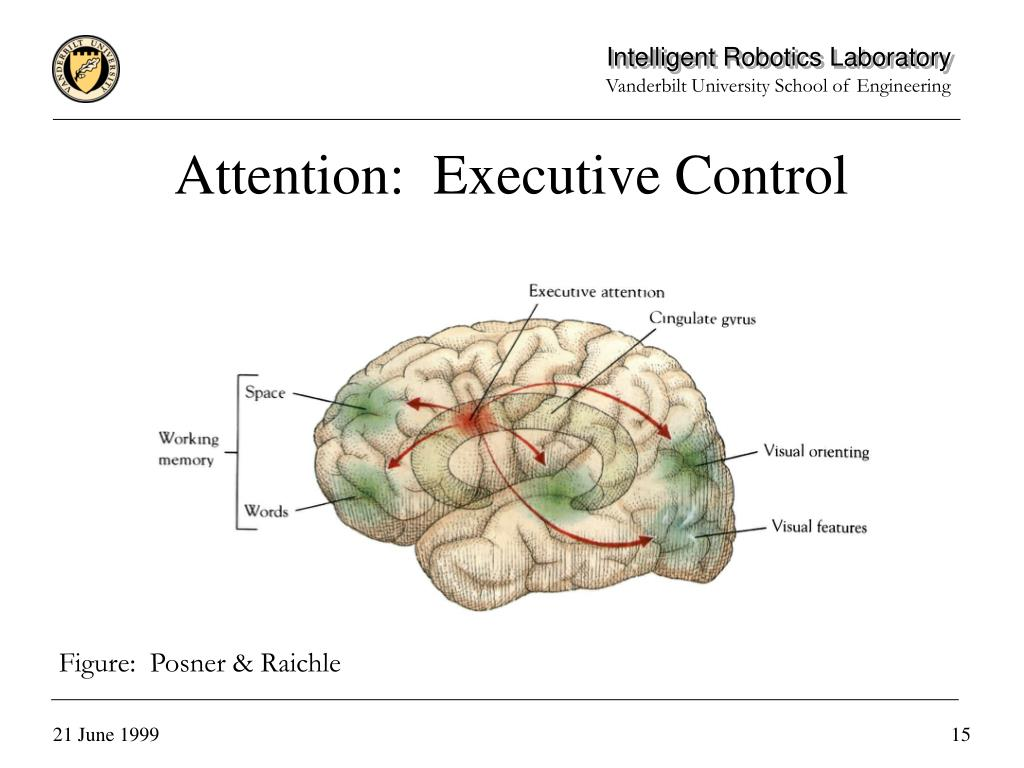 Attention:  Executive Control