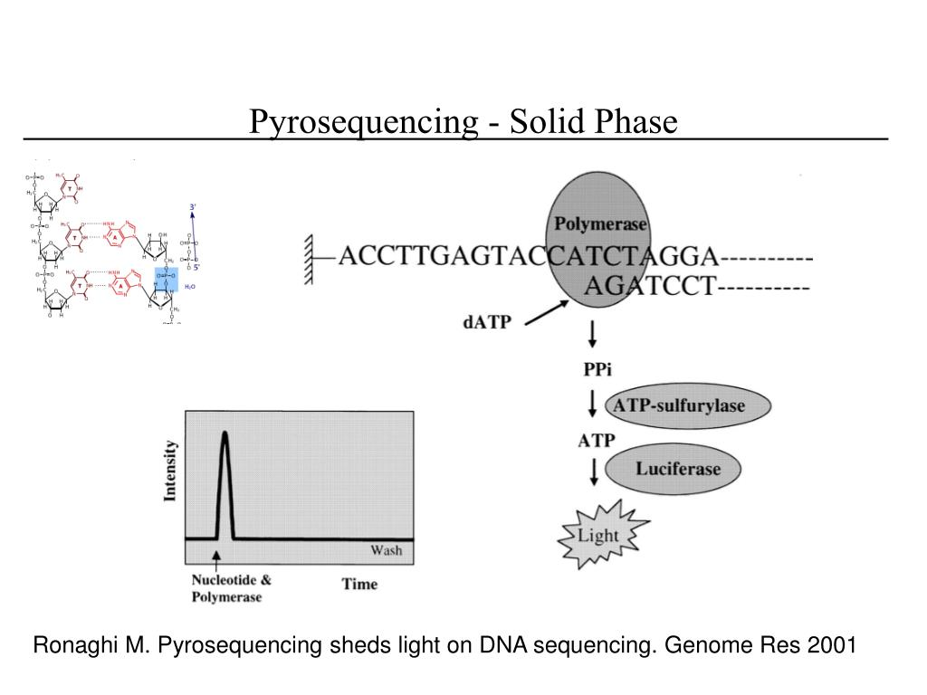 Pyrosequencing - Solid Phase