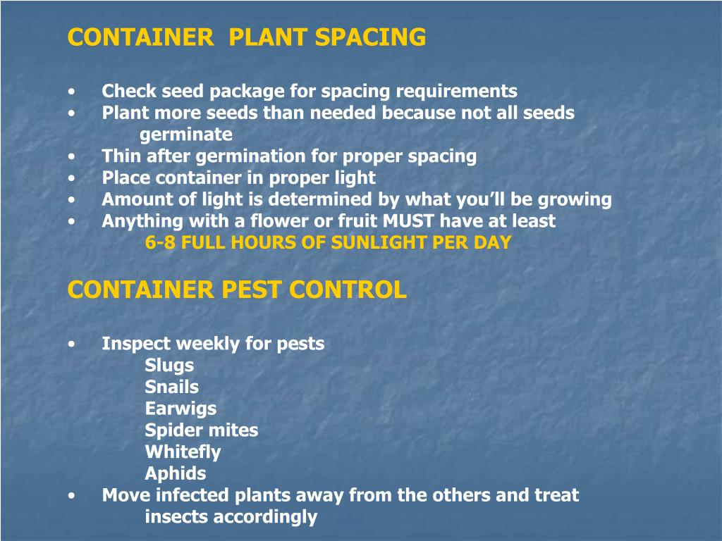 CONTAINER  PLANT SPACING
