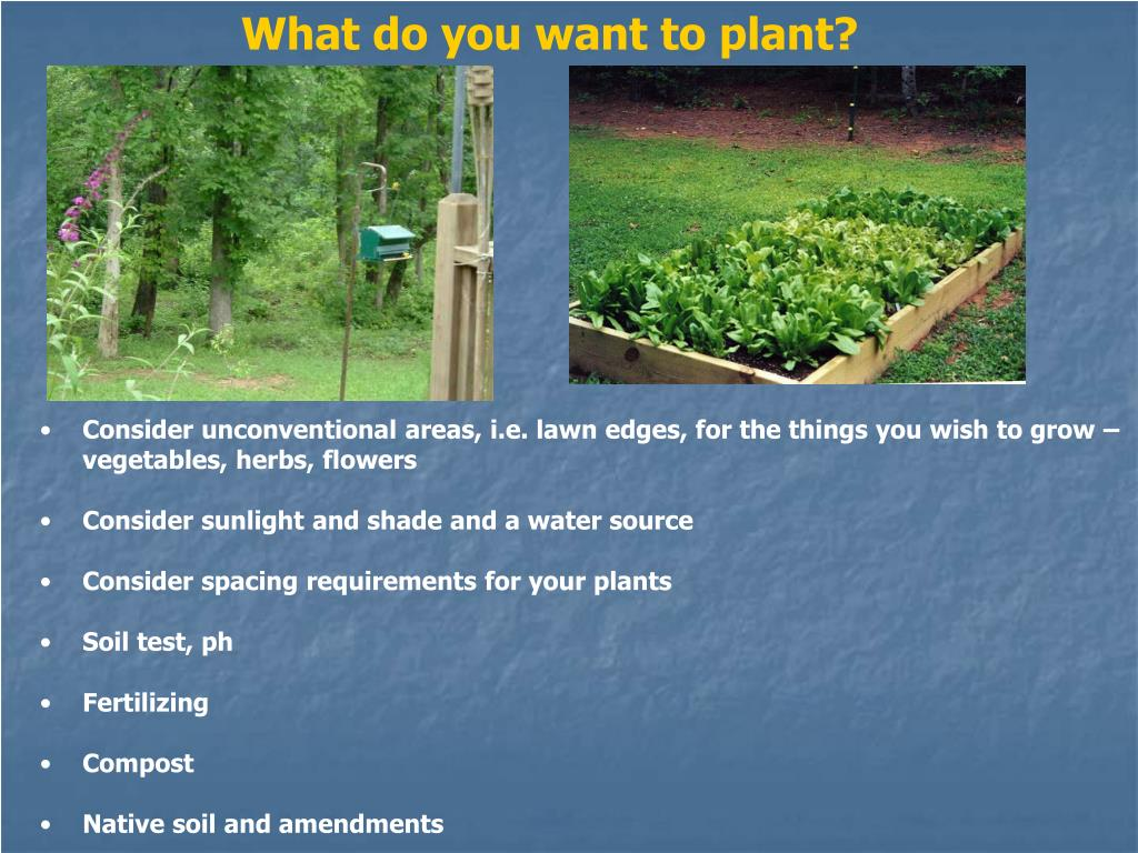 What do you want to plant?