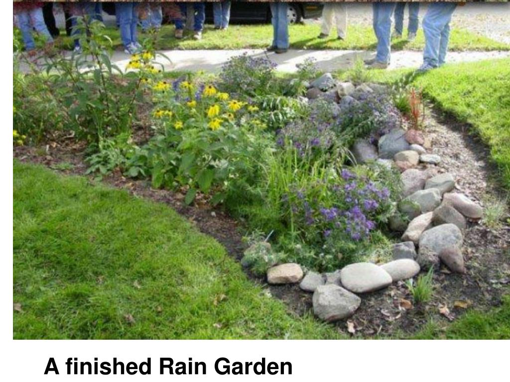 A finished Rain Garden