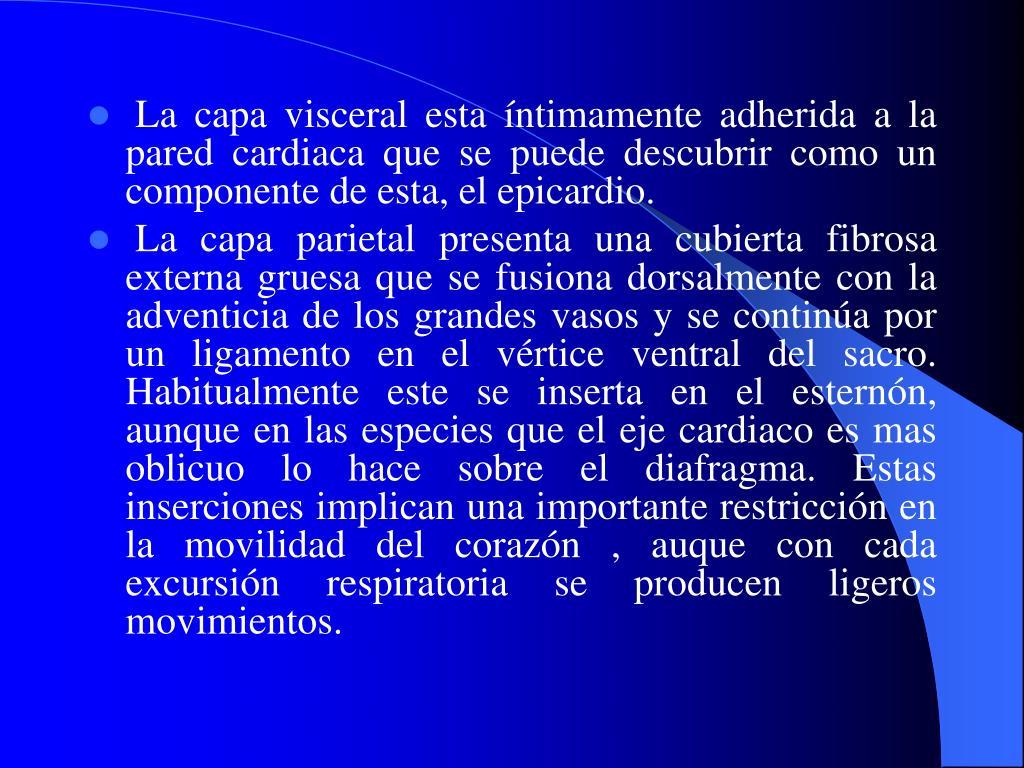 La capa visceral esta íntimamente adherida a la pared cardiaca que se puede descubrir como un componente de esta, el epicardio.
