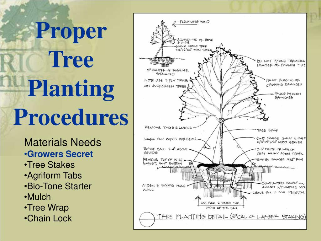Proper Tree Planting Procedures