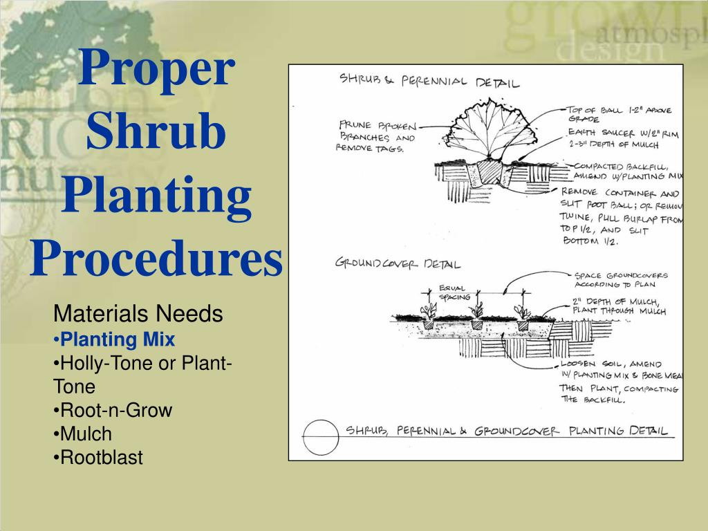 Proper Shrub Planting Procedures