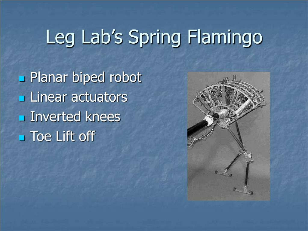 Leg Lab's Spring Flamingo