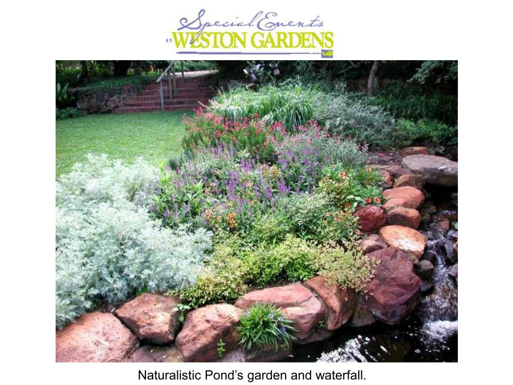 Naturalistic Pond's garden and waterfall.