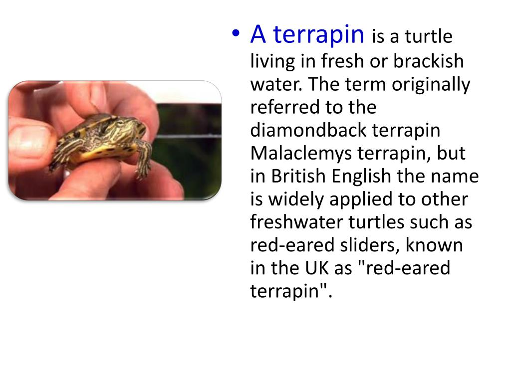 A terrapin