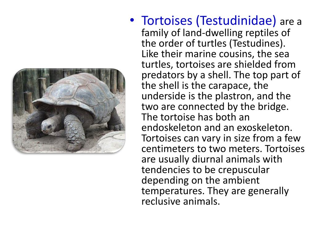 Tortoises (