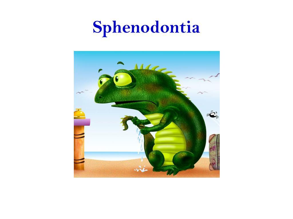 Sphenodontia