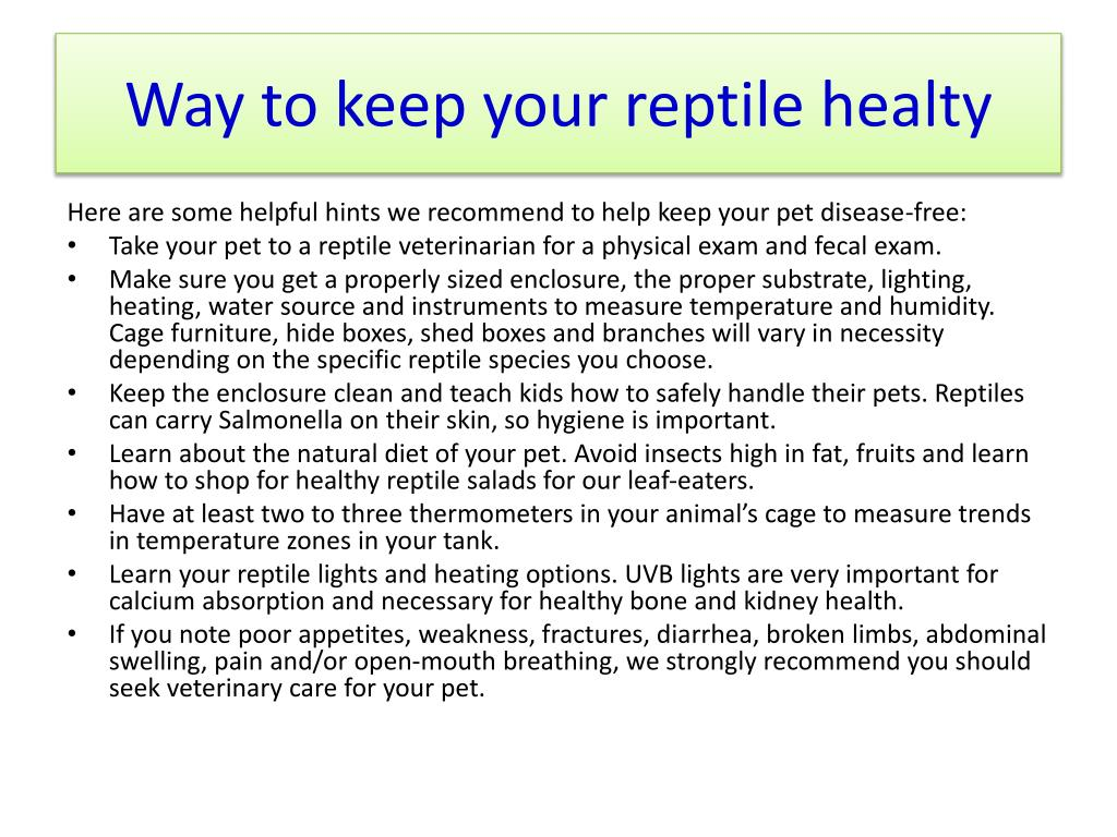 Way to keep your reptile