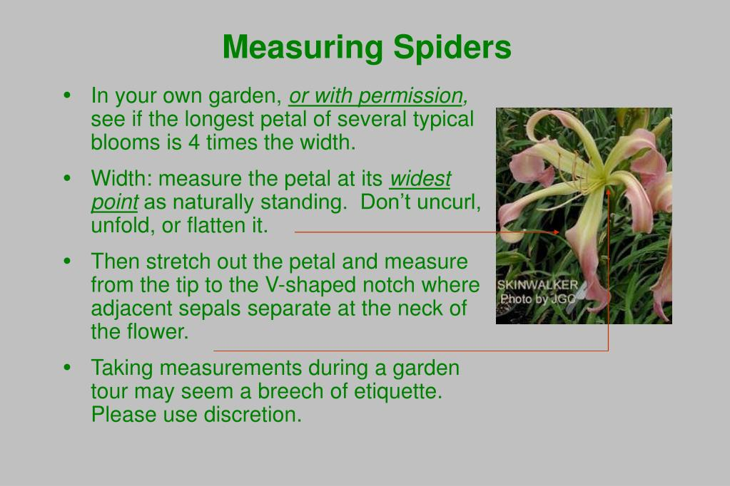 Measuring Spiders