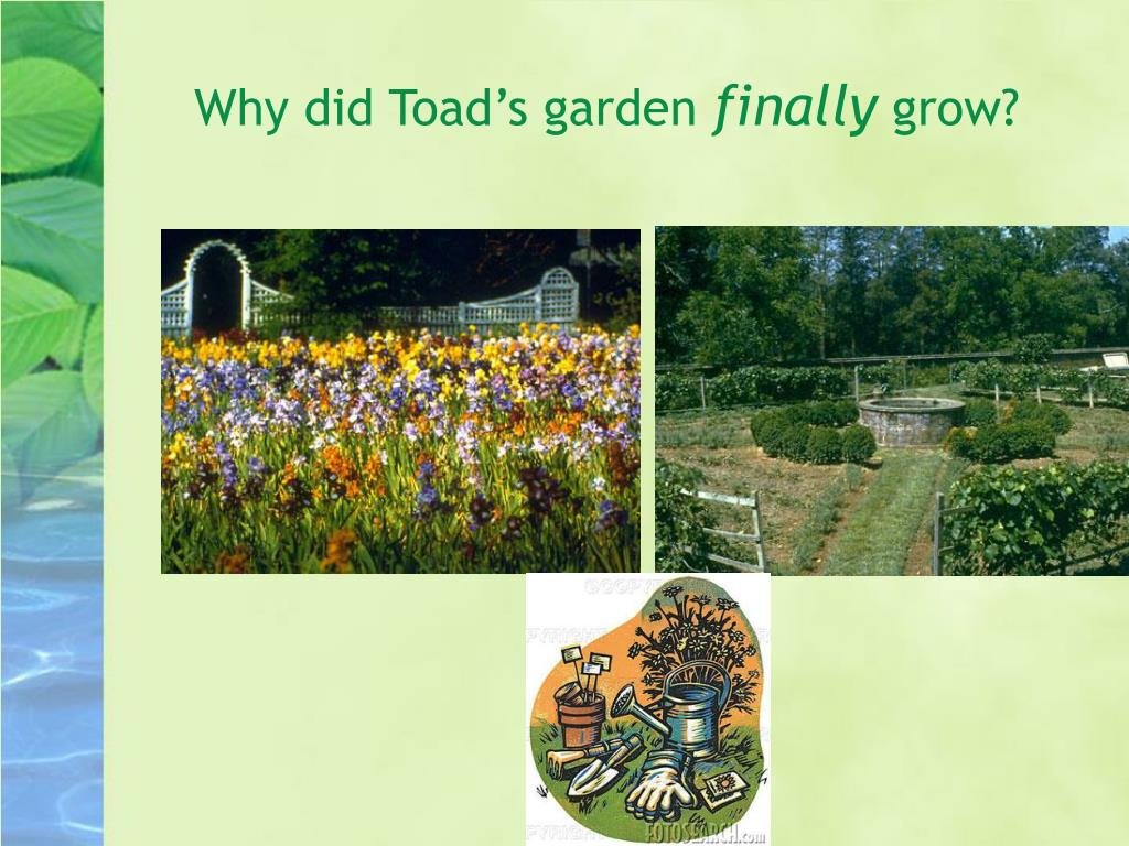 Why did Toad's garden