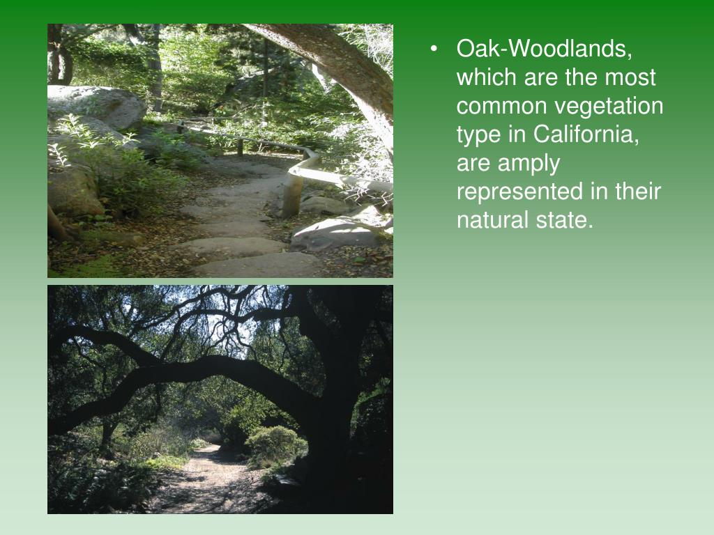 Oak-Woodlands, which are the most common vegetation type in California, are amply represented in their natural state.