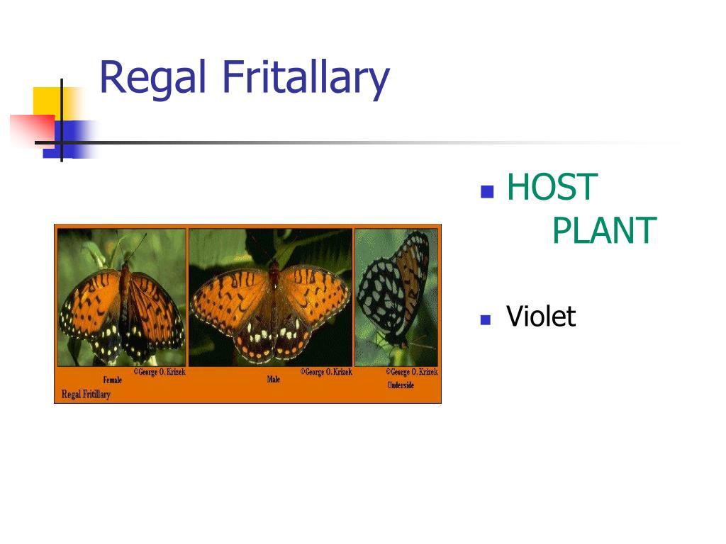Regal Fritallary
